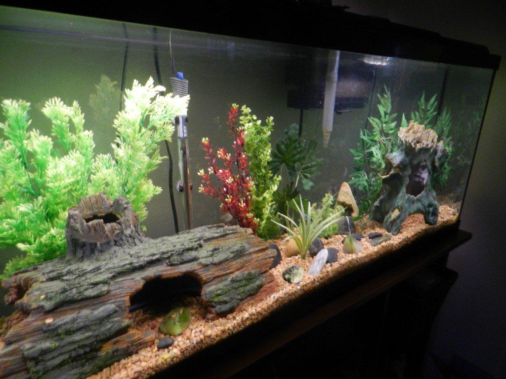 Come cambiare l 39 acqua dell 39 acquario nel modo pi semplice for Acqua acquario