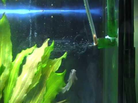co2 in acquario a cosa serve e quali soluzioni ci sono