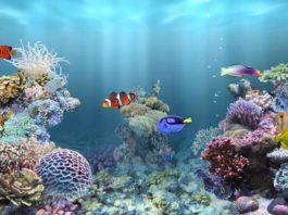 Acquario marino acquario facile for Acquario tartarughe completo