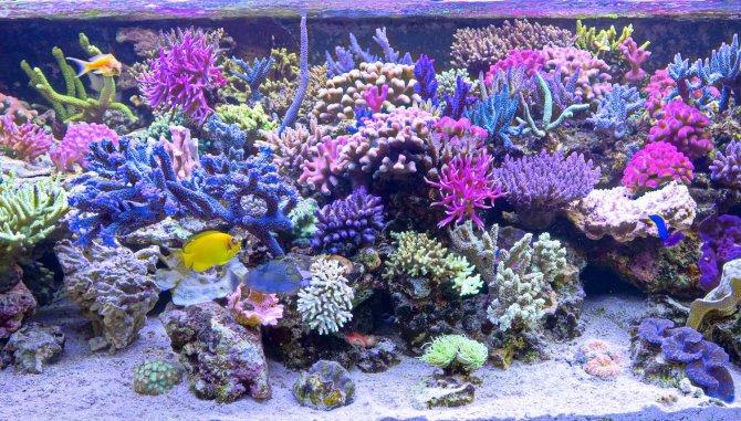 Come allestire un acquario salato 5 fasi acquario facile for Pesci per acquario tropicale