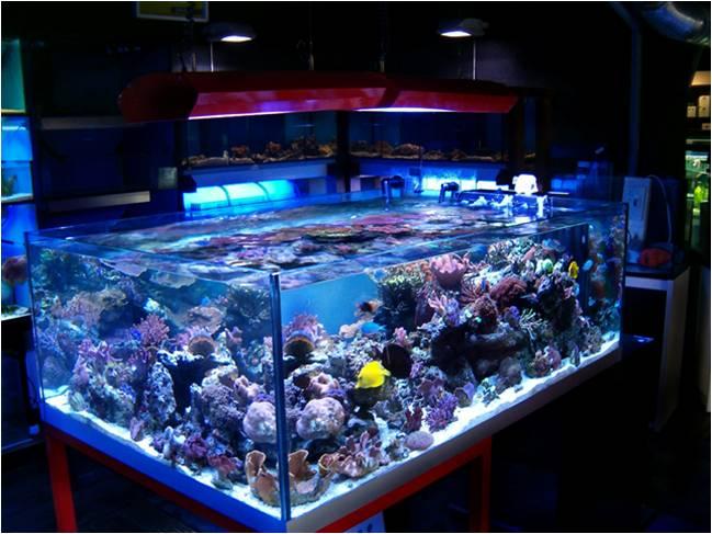 Plafoniera Led Per Acquario Acqua Dolce : Quante ore di luce servono all acquario facile