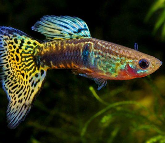 Allestimento acquario facile for Pesci acquario