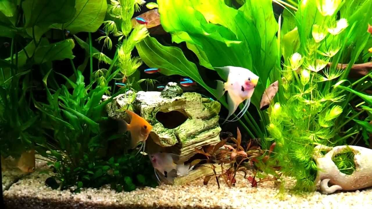 Come allestire un acquario tropicale d 39 acqua dolce for Acqua acquario