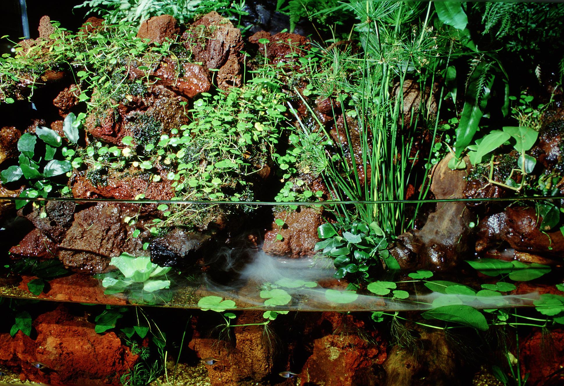 cos 39 un acquaterrario per tartarughe e come allestirlo